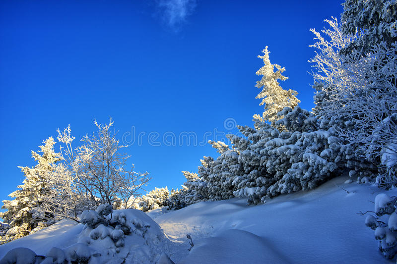 Download Snowy Trail Stock Photo - Image: 83713038
