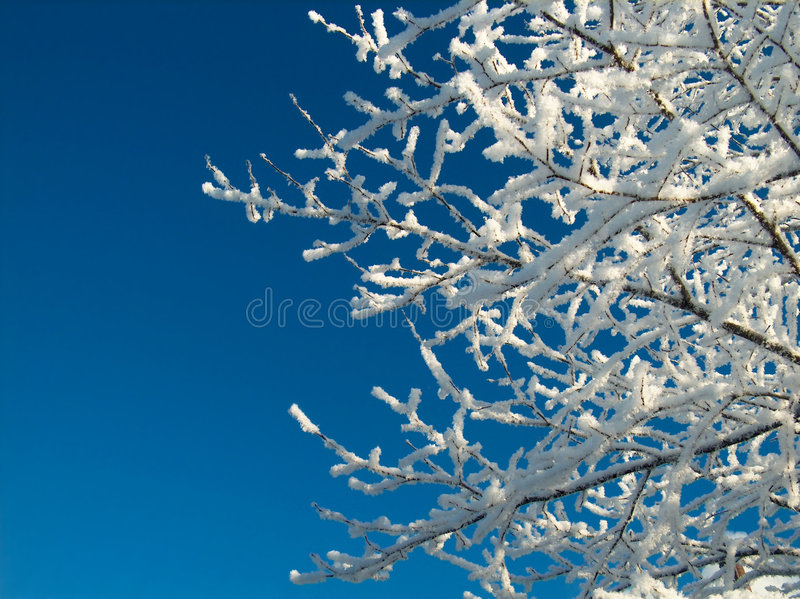 Download Snowy tree stock photo. Image of frost, wood, peaceful - 1362232
