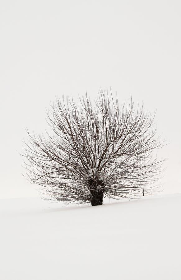 Download Snowy tree stock image. Image of poplar, desaturation - 23469463