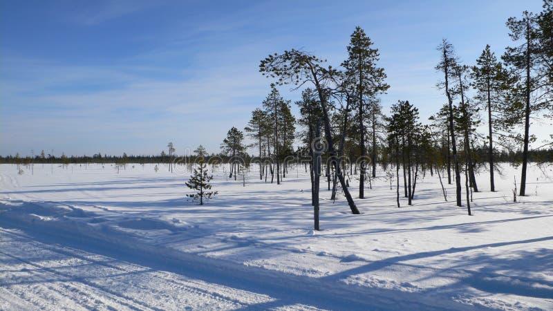 Snowy tree-lined scene stock photography