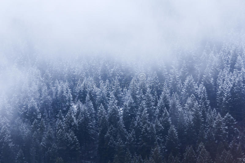 Snowy Treeline. A snowy alpine treeline. These snow covered pines adorn a mountain slope in southern BC (Canada stock photos
