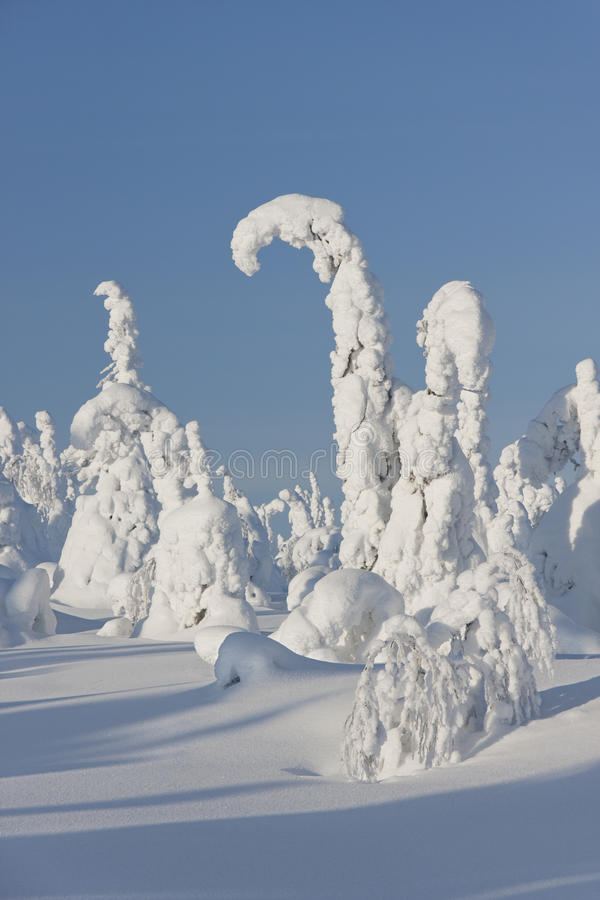 Download Snowy Trees And Blue Sky In Finland Stock Image - Image: 23656701