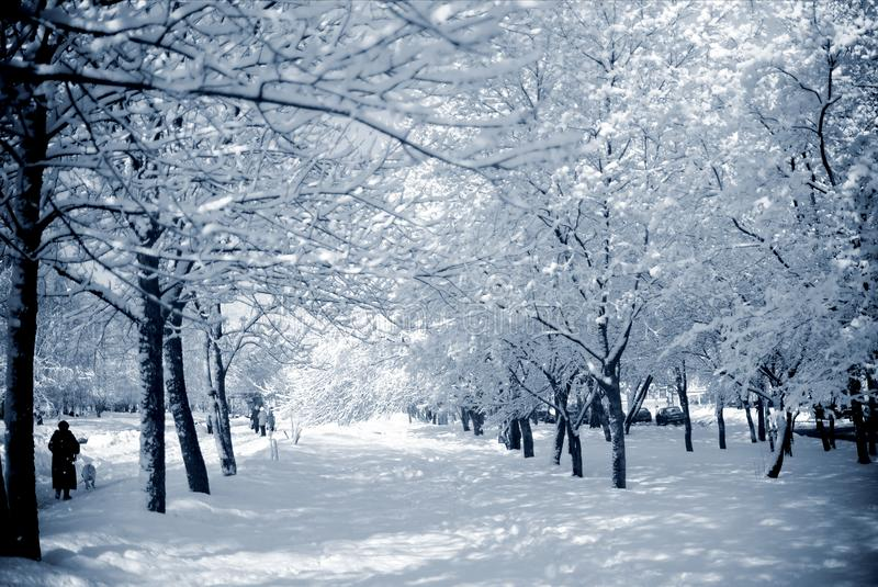 Snowy trees in a city park on a sunny day stock image