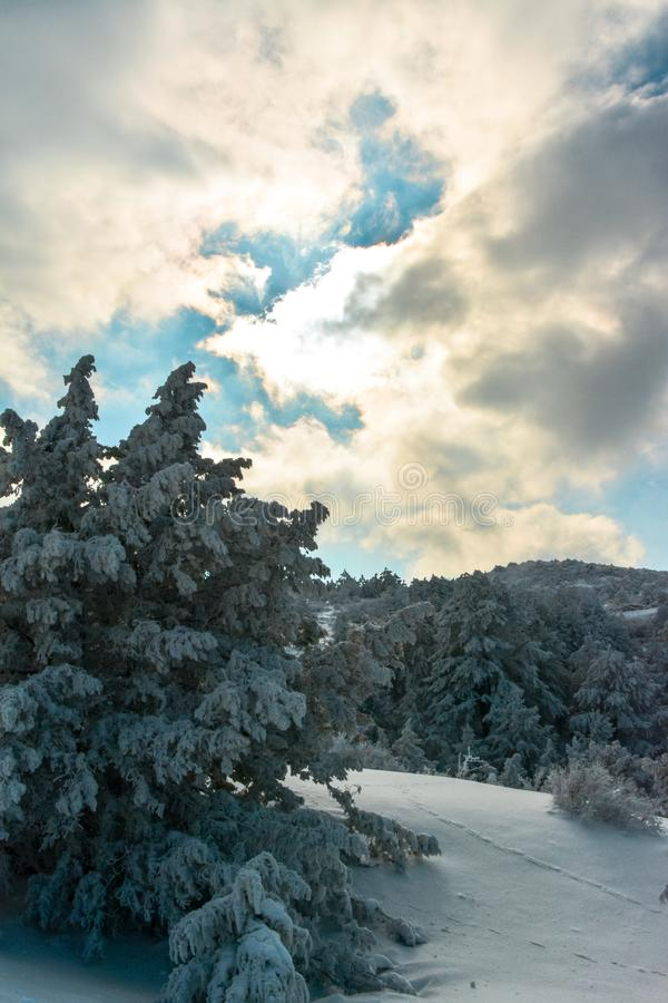 Snowy trees and mountains stock image