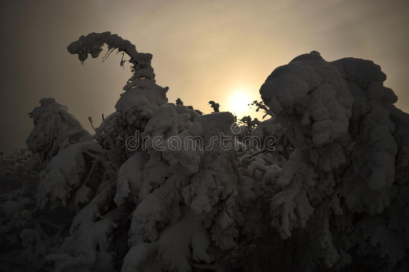 The Snowy Trees stock image