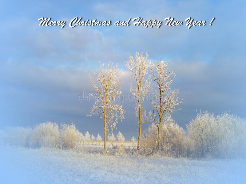 Merry Christmas  card done using trees   in winter , Lithuania stock photo