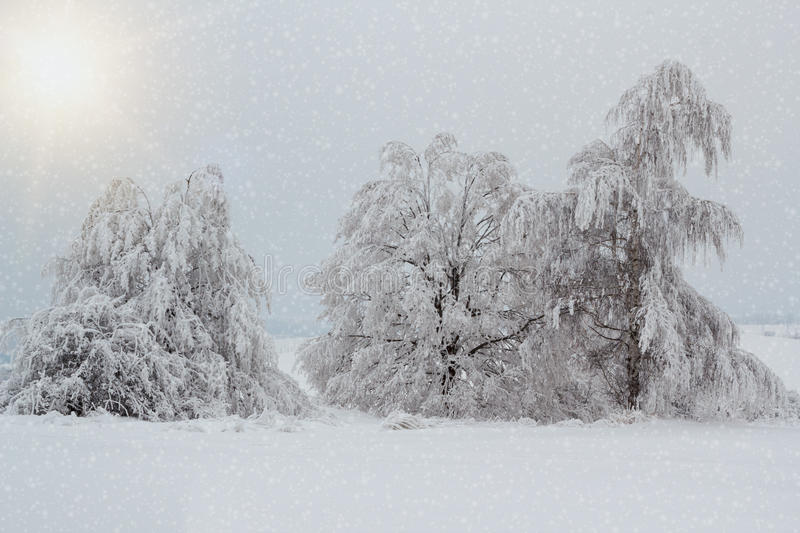 Snowy Trees In Winter Landscape Royalty Free Stock Image