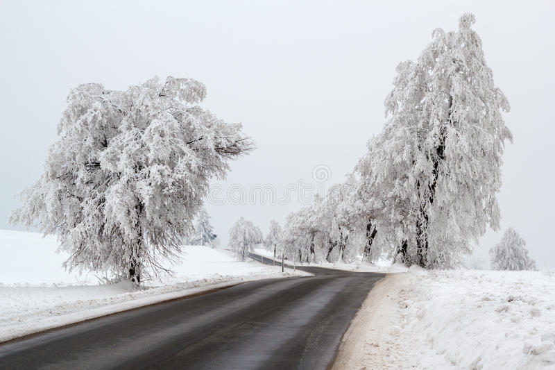 Snowy Trees In Winter Landscape Royalty Free Stock Images
