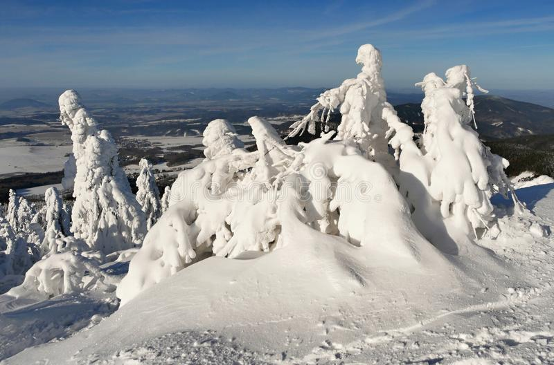 Snowy trees of a winter mountain. Amazing snowy trees of a winter mountain. Czech republic royalty free stock photos