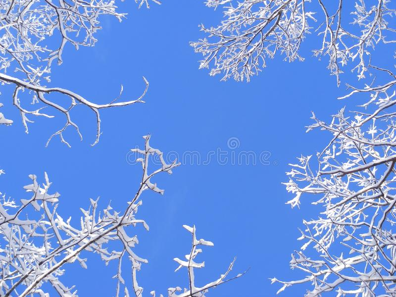 Download Snowy treetops stock photo. Image of virginia, still, heaven - 8161840