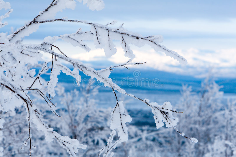 Download Snowy Twigs. Frozen Mountains And Blue Sky On Background Stock Photo - Image: 1594300