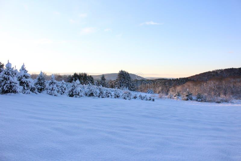 Snowy Vermont Christmas Tree Farm royalty free stock photography