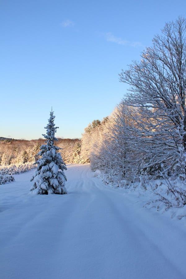 Snowy Vermont Christmas Tree Farm stock images