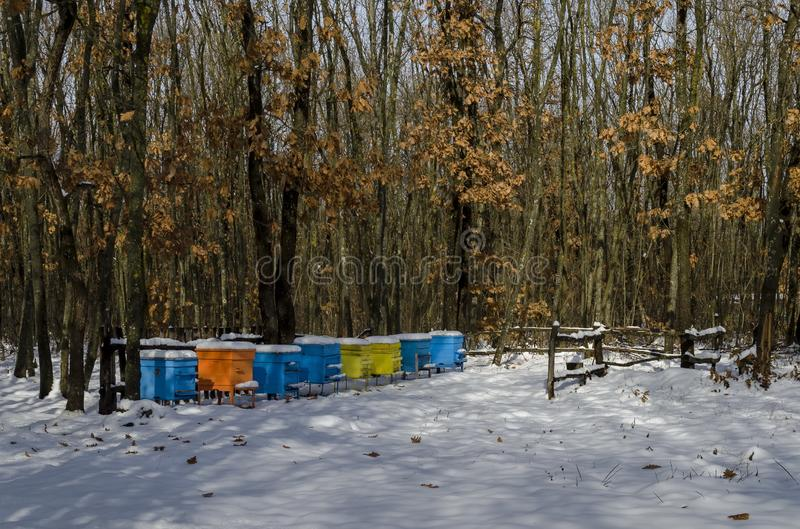 Snowy view toward apiary with bee hive in the winter field at deciduous forest stock photos
