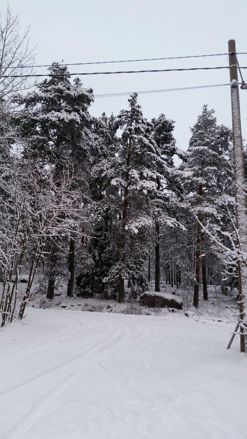 Snowy-Wald lizenzfreie stockfotos