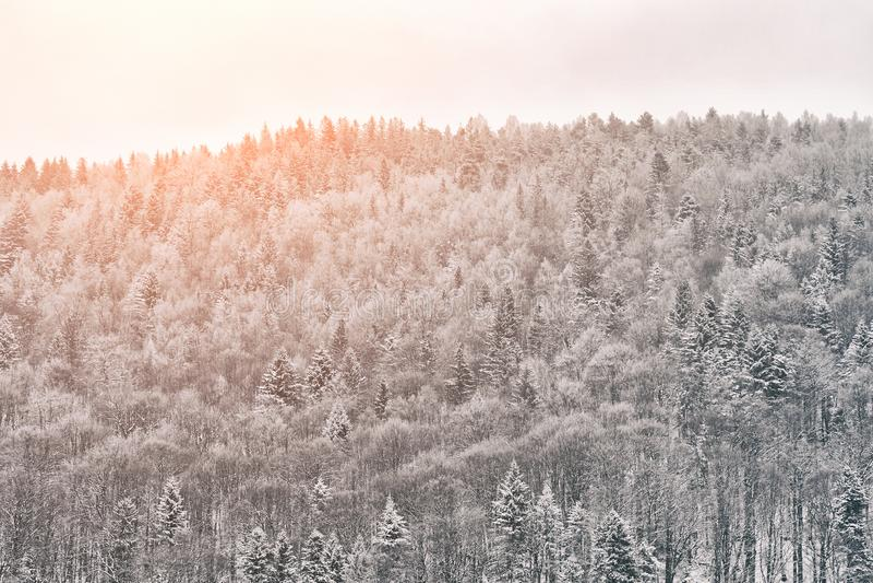 Snowy-Wald auf dem Hügel Sonniger Tag Russland, UralJanuary, Temperatur -33C stockfotografie