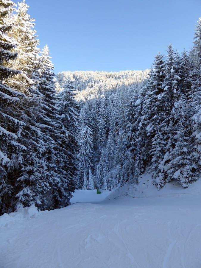 Snowy-Wald in den österreichischen Alpen lizenzfreie stockfotografie