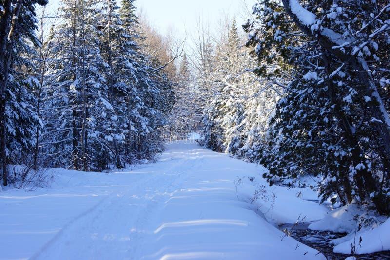 Snowy-Waldweg im Winter lizenzfreie stockfotografie