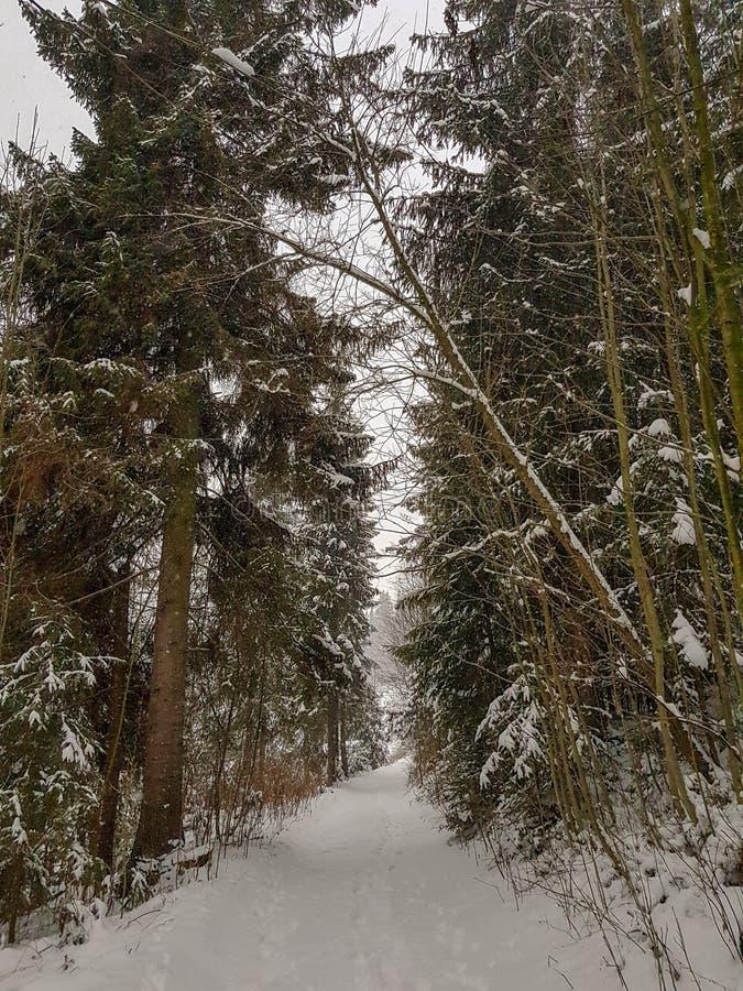 Snowy-Weg im Wald während des Winters lizenzfreie stockbilder