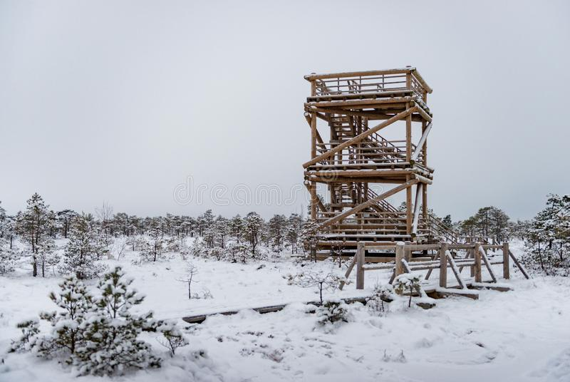 Snowy winter day at swamp. Small swamp trees and watchtower stock photos