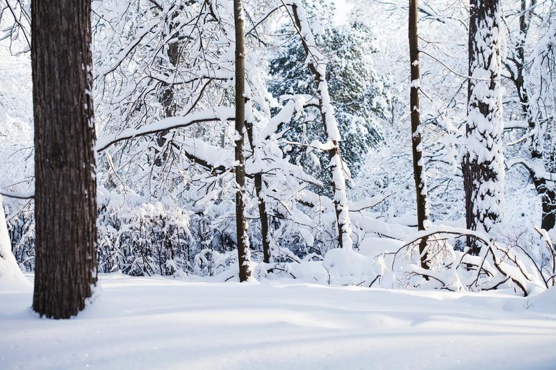 Snowy winter forest background. Cold weather scene, snow covered trees landscape. royalty free stock images
