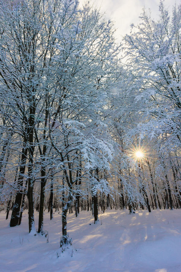 Snowy winter forest landscape stock images