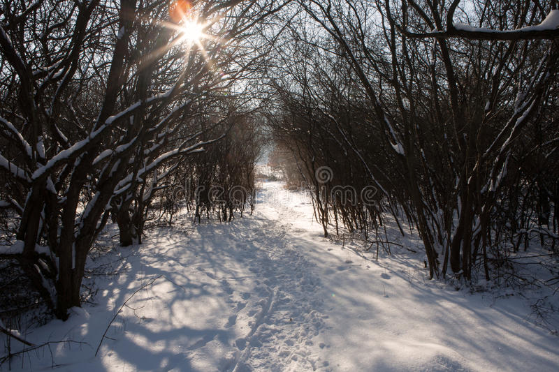Snowy winter forest and pathway with trails and sunbeam royalty free stock images