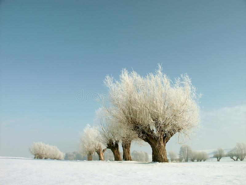 Download Snowy Winter Landscape, Frost Covered Trees Stock Image - Image: 10729665