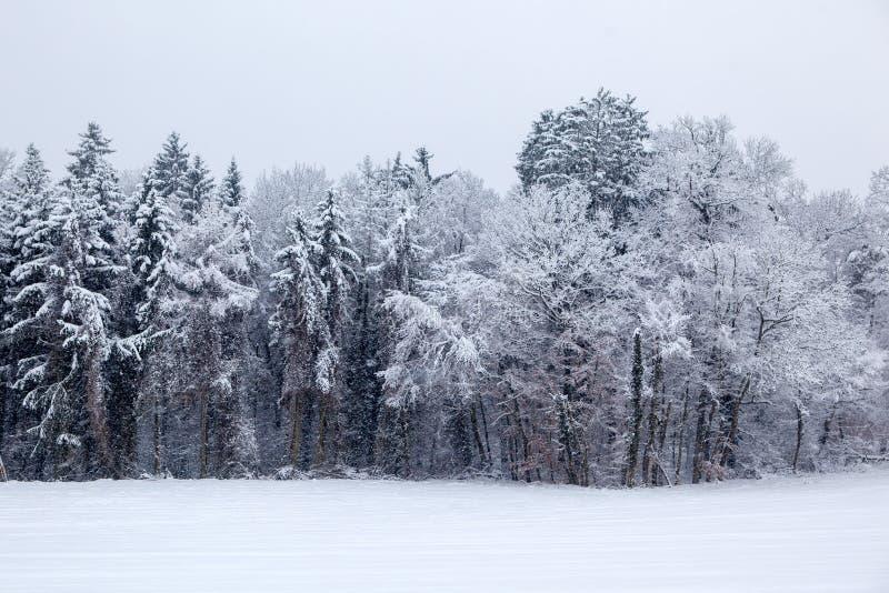 Snowy Winter Landscape. Seasonal Photography stock photos