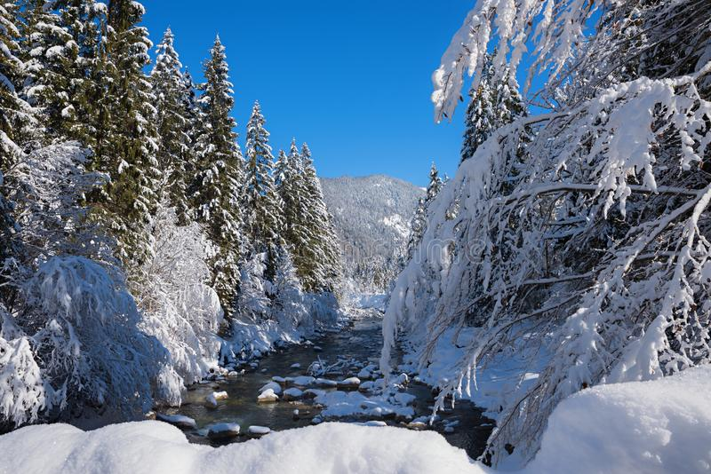 Snowy winter landscape Weissach river near Kreuth, bavarian alps. Beautiful sunny snowy winter landscape Weissach river near Kreuth, bavarian alps royalty free stock images