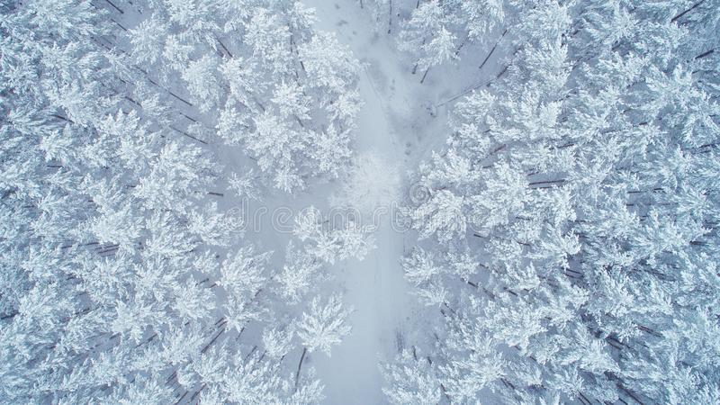 Snowy winter nature. Forest covered by snow from above. Aerial view of winter forest. Beautiful christmas background