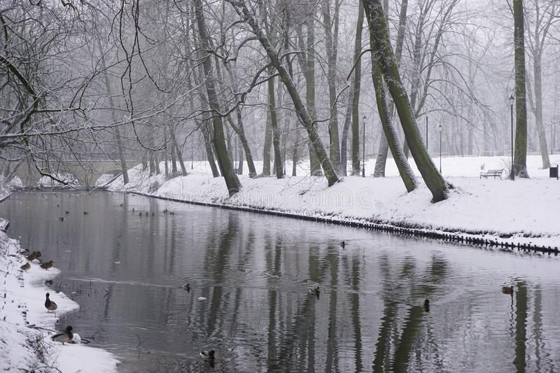 Winter in Park 11 royalty free stock image