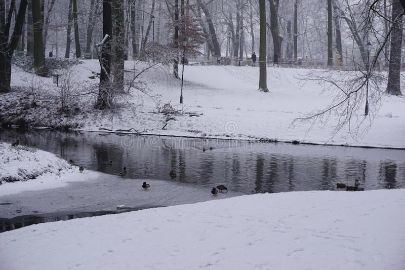 Winter in Park 6 royalty free stock photo
