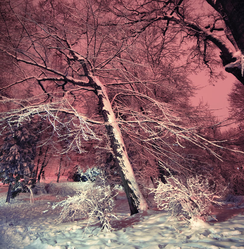 Download Snowy winter park at night stock photo. Image of russia - 28880792