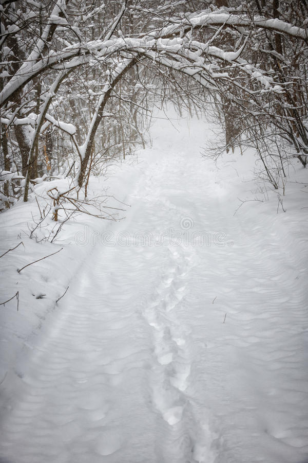 Snowy winter path in forest royalty free stock photography