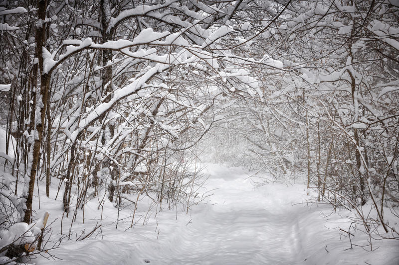 Snowy winter path in forest stock photography