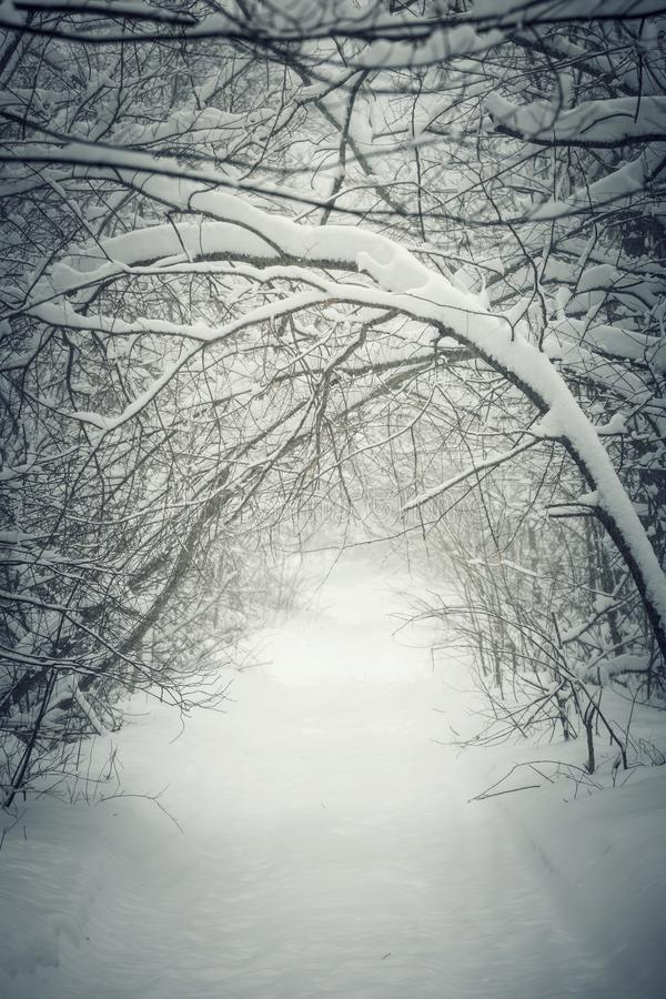 Snowy winter path in forest royalty free stock images