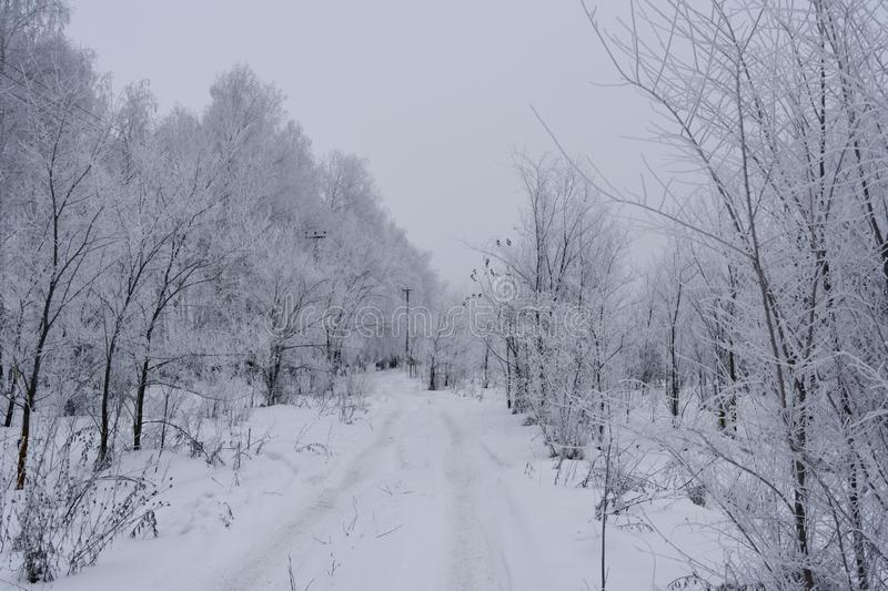 Snowy winter road in the forest with trees covered by hoarfrost.  royalty free stock photo