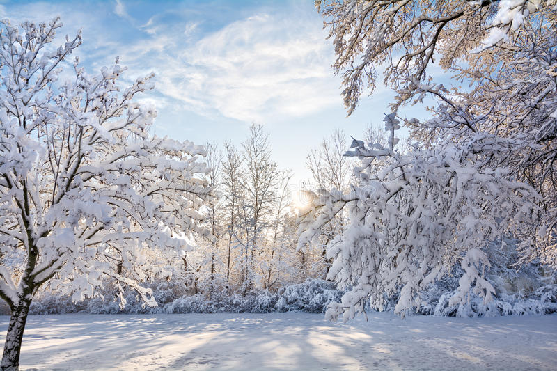 Snowy Winter Sunrise Scene stock photo