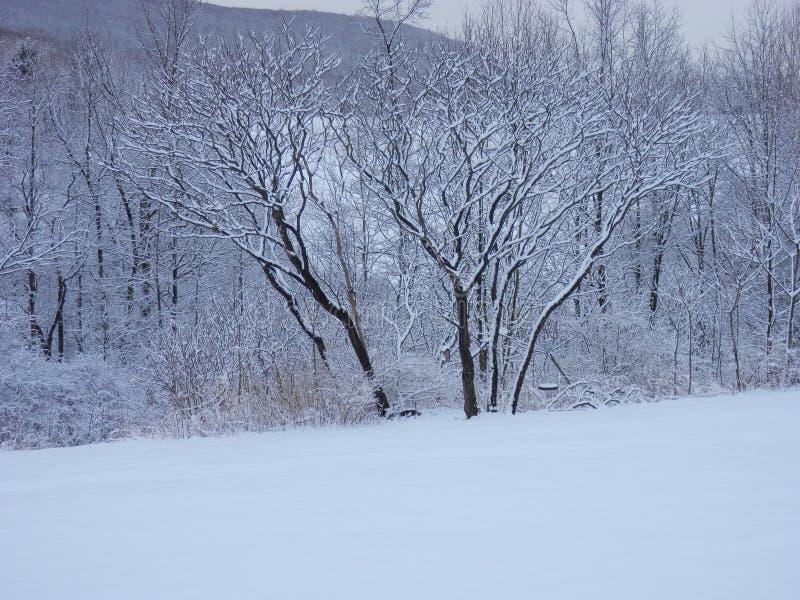 Snowy winter wonderland stock image