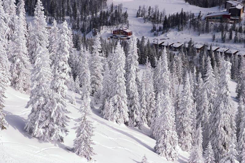 Snowy-Winterlandschaft lizenzfreie stockfotos