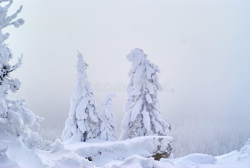 Snowy wooded mountain pass during a snowstorm. Landscape - snowy wooded mountain pass during a snowstorm stock image