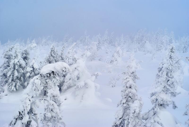 Snowy wooded mountain pass during a snowstorm. Landscape - snowy wooded mountain pass during a snowstorm royalty free stock photo
