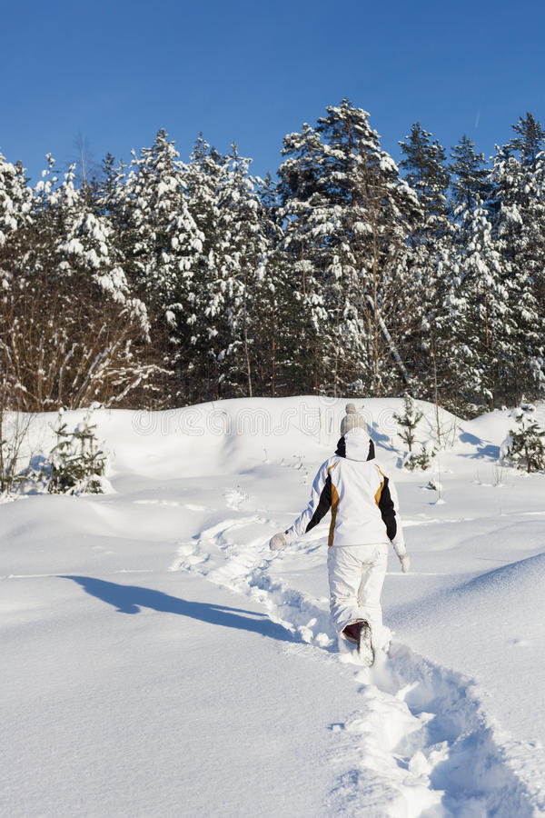 Download Snowy woodland stock photo. Image of countryside, holiday - 28829126