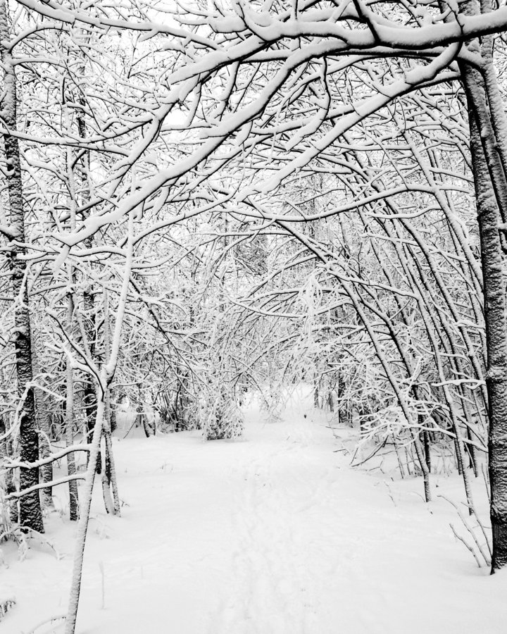 Download Snowy Woods stock image. Image of winter, trees, frosty - 176915