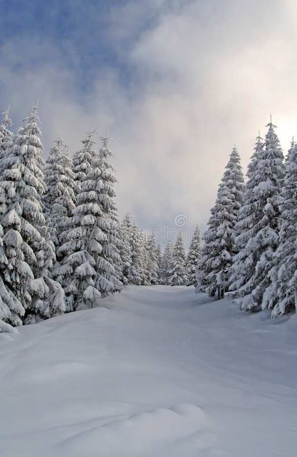 Snowy Woods stock images