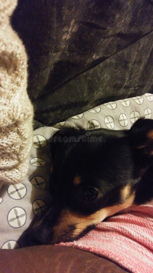 Snuggle time! stock photo