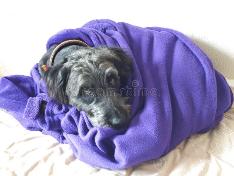 Snuggles в одеяле стоковое фото