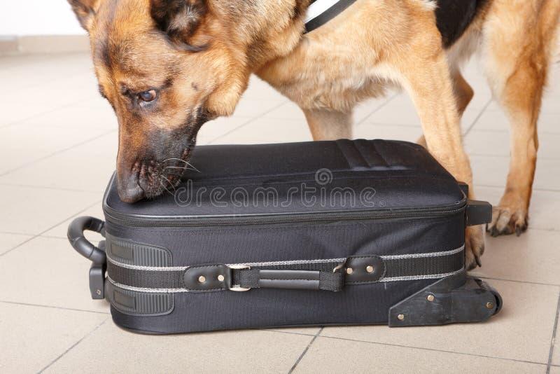 Snuivende hond chceking bagage royalty-vrije stock fotografie