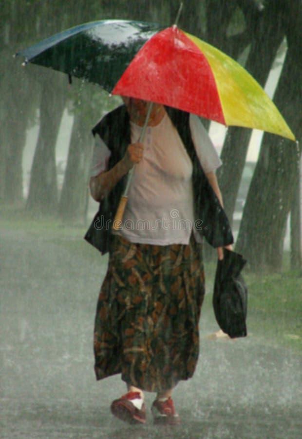 Download Soak / Rainy Day stock photo. Image of gust, drench, soak - 225864